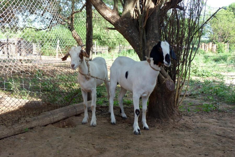 Im Jahre 2012 ermöglichte Edumanía die Anschaffung eines Beamers und einer Projektionsleinwand, einer Stichsäge und 10 Zirkeln. Aus den Fördermitteln wurden auch zwei Ziegen erworben, um eine Züchtung in der Schule zu beginnen.