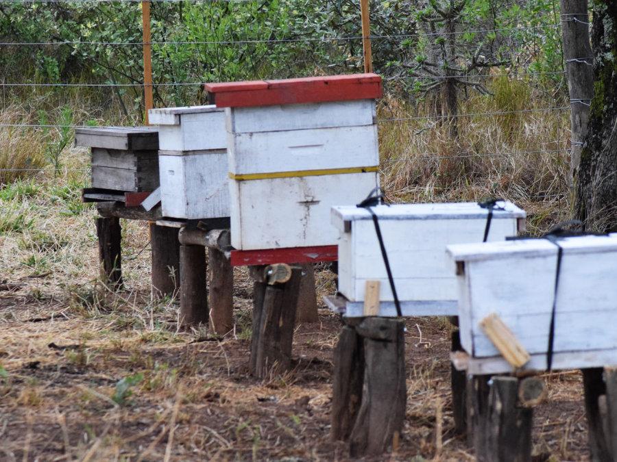 leider wurden die bienenstoecke der agritecnica-provincial durch wandalismus beschaedigt